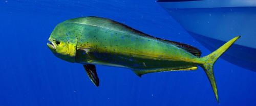 homeslider-dolphin